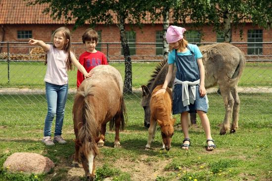 Farma Zwierząt Miniaturowych